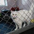 猫を『ペットホテル』に預けるときに準備すること5つ