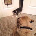 わんちゃんドキ!子猫ちゃんドキドキ!お互い怖がる子猫と犬がかわい…