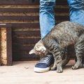 猫が帰宅した飼い主にスリスリする3つの理由