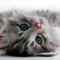 飼う前に知っておきたい猫の意外な生態や習性