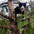 「弟を守る!」と後を追って木に登った兄猫。揃って木の上で立ち往生