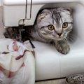 エリザベスカラーが使えない愛猫に術後服をDIY!