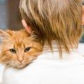 高齢になった愛猫にしてあげられる5つの事