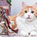 コードの事故に要注意!猫が感電しない為にできる予防策とは?