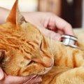 猫の膵炎 症状と治療法