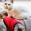 一緒にフミフミ!?仲良しな先輩猫さんと後輩猫さん♡