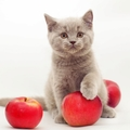 猫にりんごを食べさせても大丈夫!与える方法や注意点