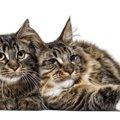 猫に新型コロナ感染の可能性 研究で明確に|海外ニュース