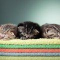 猫が妊娠した際の兆候とその過程