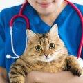 季節の変わり目は要注意!猫の健康管理2選