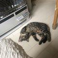 猫がファンヒーターの前を独占!気をつけるべきこと5つ