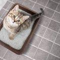 一人暮らしで猫を飼ったらトイレの場所はどこがベスト?