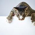 猫が脱水症状を起こす5つの原因とその対策