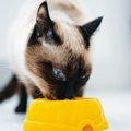 愛猫の健康のため知っておこう!キャットフードの裏面で確認してほし…