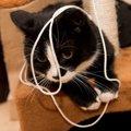 飼い主が寝ている時猫は何をして過ごしている?
