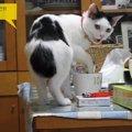 賢い猫ちゃん、飼い主さんに叱られてしょんぼりお返事❤