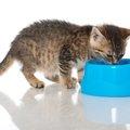 猫の慢性腎不全の症状や原因、治療と予防法