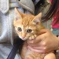 譲渡会で出会った保護猫。今では主張の激しいわがまま娘に!