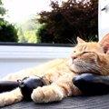うたた寝も、なすを枕にいい気分!夏の終わりになす枕にゃ!
