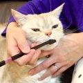 猫ちゃんの歯磨き!今からでもしっかり歯周病予防