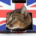 イギリスの猫種8選と暮らし方