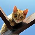 猫が高いところが好きな理由と本能や習性