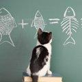 猫にしらすを食べさせても大丈夫?与える時の注意点や与え方