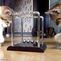 カチカチボールを攻略したい子猫ちゃん、最後はヤケになる