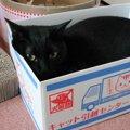 動物病院の里親募集で見つけた仔猫