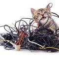 猫はなぜ『電気コード』を噛むの?4つのワケと事故防止策
