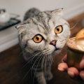 猫にウエットフードだけを与えても大丈夫?注意点3つ
