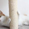 猫が爪とぎをする6つの理由