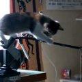 「あっ!危ない!」ピンチの子猫ちゃんが魅せた華麗なる技☆