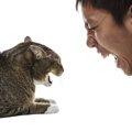 猫が嫌いな音は?具体例と意外な活用方法をご紹介!