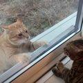 おうちを守らなくちゃ!奮闘するボス猫さん!