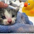 ボランティアさんと老猫が親代わりになって育てた子猫