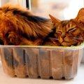 猫が『入れ物』にハマる3つの理由