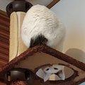 【クセが強い】監視の仕方がアクロバティック過ぎる猫さん♡