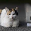 野良猫対策の3つの方法