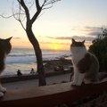 ビーチで猫たちと一緒に初日の出!ノーリードでも大丈夫なんです♪