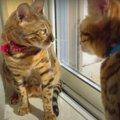 気持ちの良い朝を過ごす猫ちゃん♡夫猫さんに邪魔されてブチギレ!?