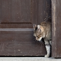 猫の脱走防止扉の使い方と選び方!逃げ出さない対策が大切
