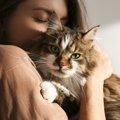 日常の中で起きやすい『猫の事故』4つ!まさかこんなことになるなん…