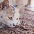 猫は何歳から長生き?長寿の秘訣3つ