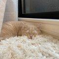 猫を『幸せにする』飼い主の特徴5つ