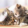 猫は人間を慰める!?泣いている人に猫が反応する理由