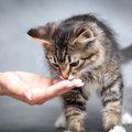 猫はメロンを食べられる?その与え方と注意する事