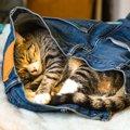 猫が飼い主の服を噛んだり吸ったりする心理4つ