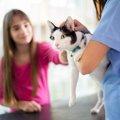 猫のうんちから健康状態を把握しよう