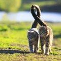 猫が『ご機嫌な時』にする尻尾の動かし方4選